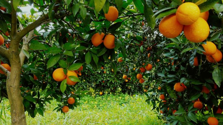 Orange Keto blues again? Here are 4 refreshing hacks