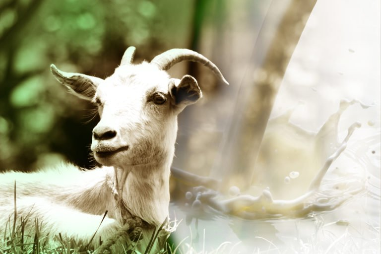 Goat milk – On the throne of Keto dairy
