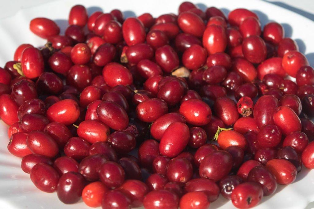Cornelian cherry